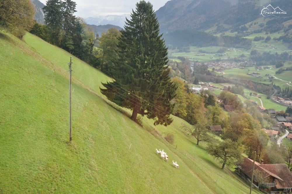 Stockhorn_Switzerland_Anna_Kedzierska-0969
