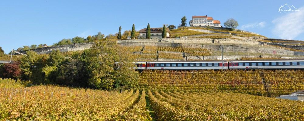 Lavaux_Switzerland_Anna_Kedzierska-0528