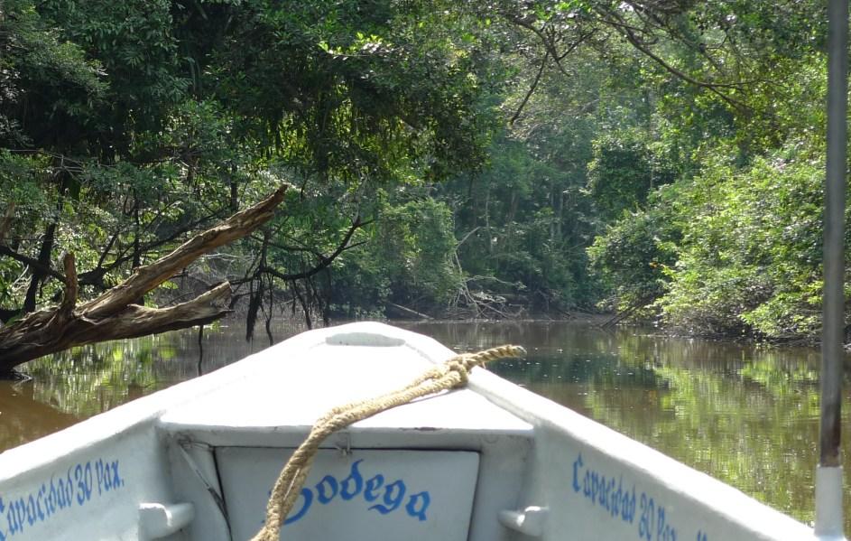 P1010727 Amazon River