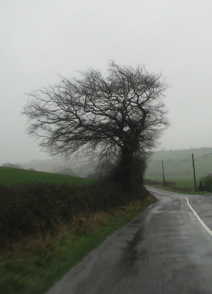 1382 Tree, Wind, & Rain~
