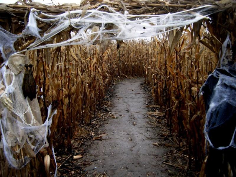 Corn Maze Spider Webs
