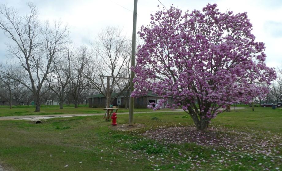 P1110145 Magnolia Springs