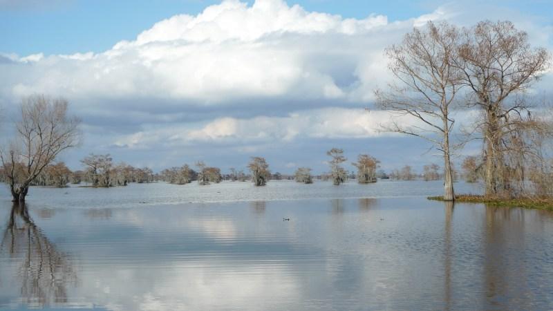 P1110779 Basin Landing, Bayou Swamp, Breux Bridge