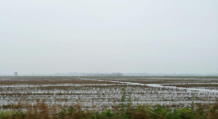 P1110874 Rice Fields