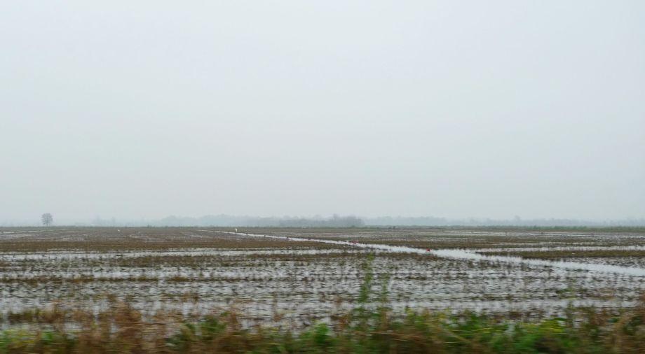P1110874 Rice Fields