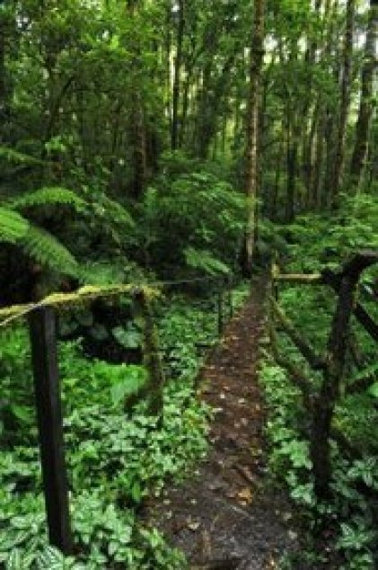 Hike Path