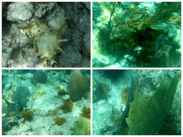 珊瑚、贝壳