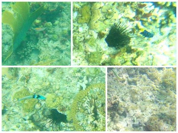 可爰的热带鱼儿
