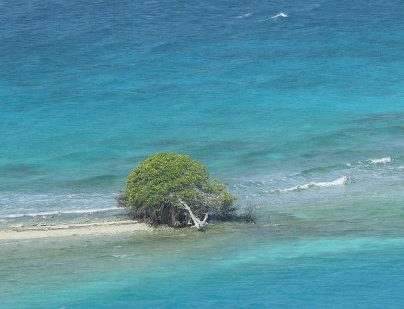 沙滩上的迎客树