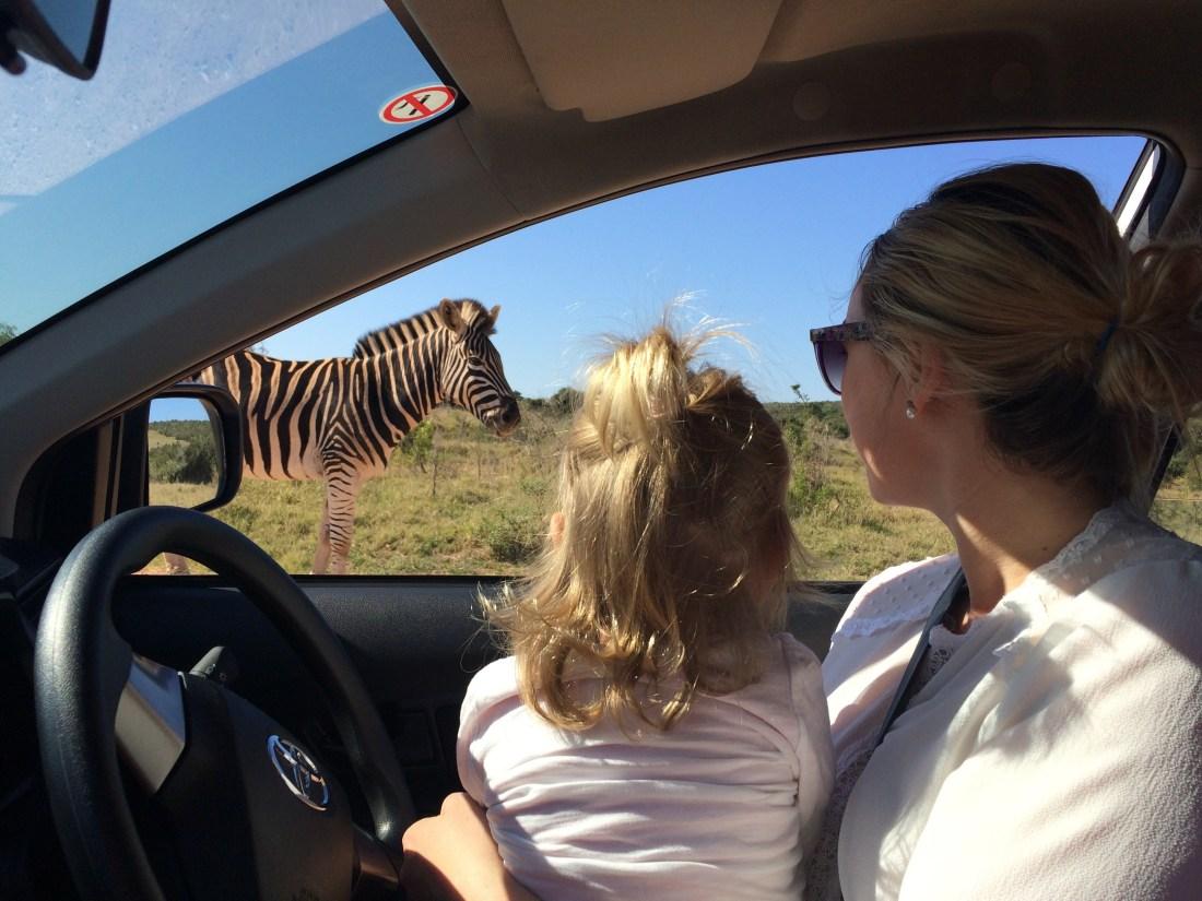 Addo National Elephant Park 2