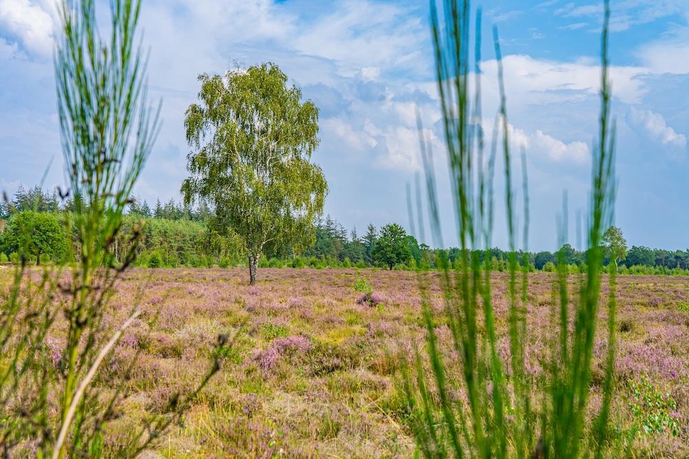 Maashorst wandelen Boswachterspad Kanonsbergroute