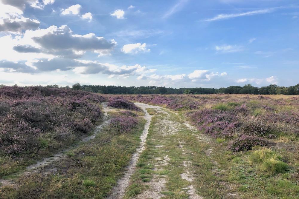 Mooie natuurgebieden in Nederland: Gasterse Duinen Drenthe