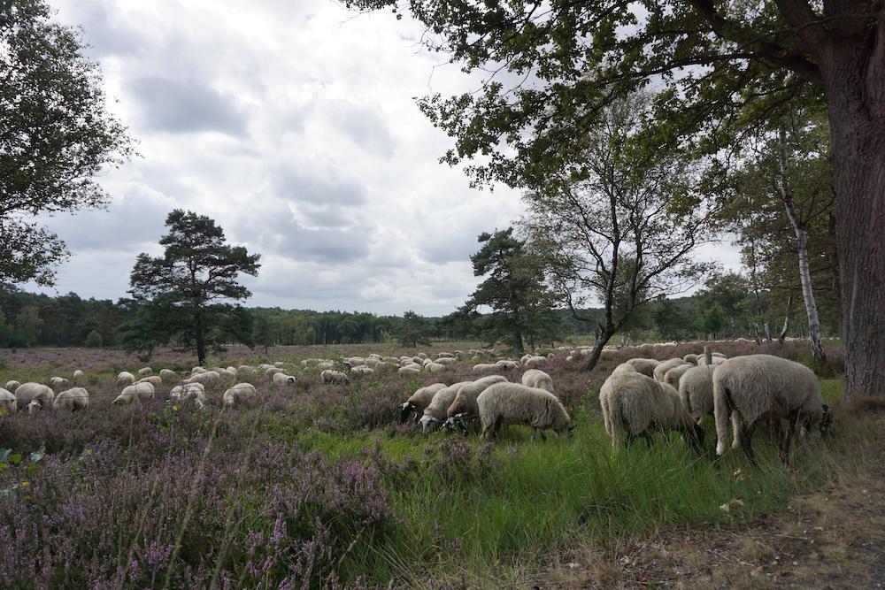 Wandelen Brunssummerheide Zuid-Limburg