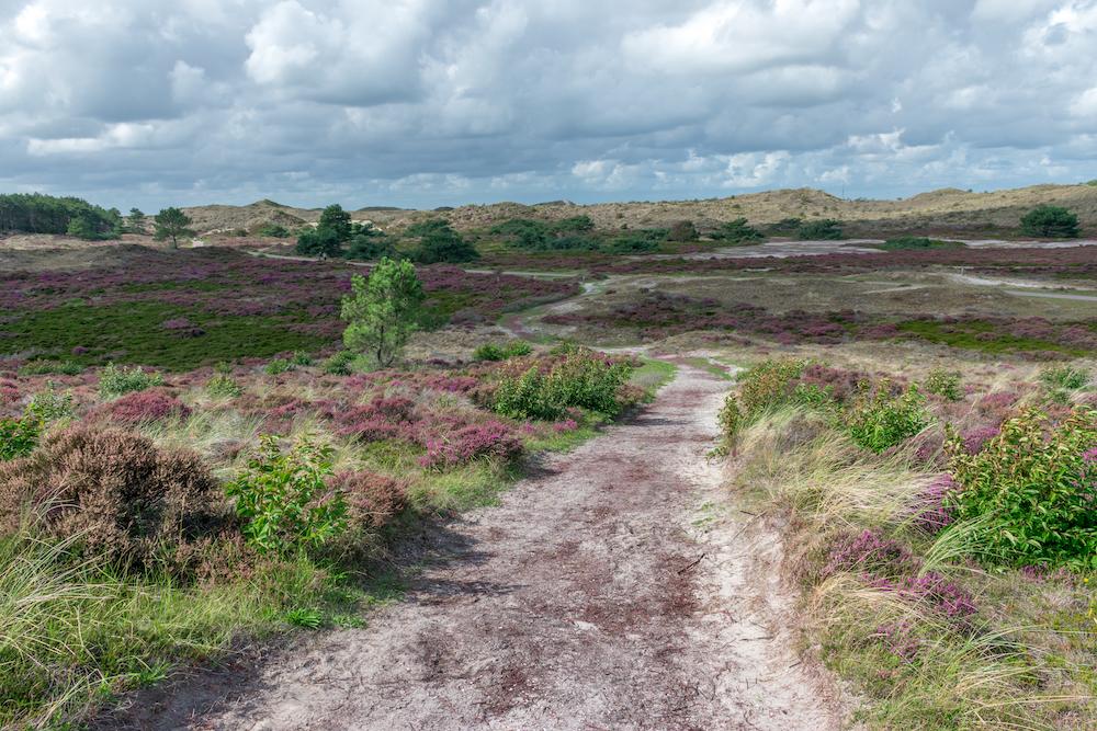 Natuurgebieden in Nederland: Wandelen Schoorlse Duinen