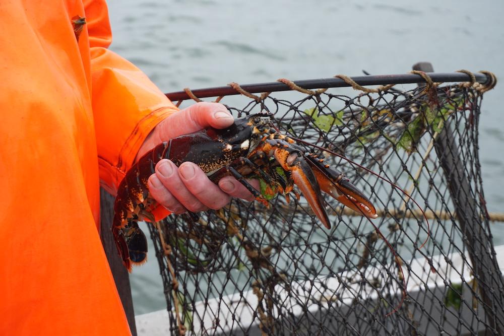 Kreeftenvisser Oosterschelde