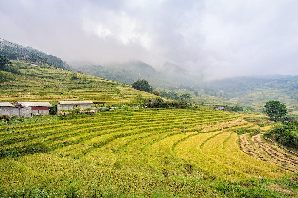 Rijstvelden Sapa Vietnam