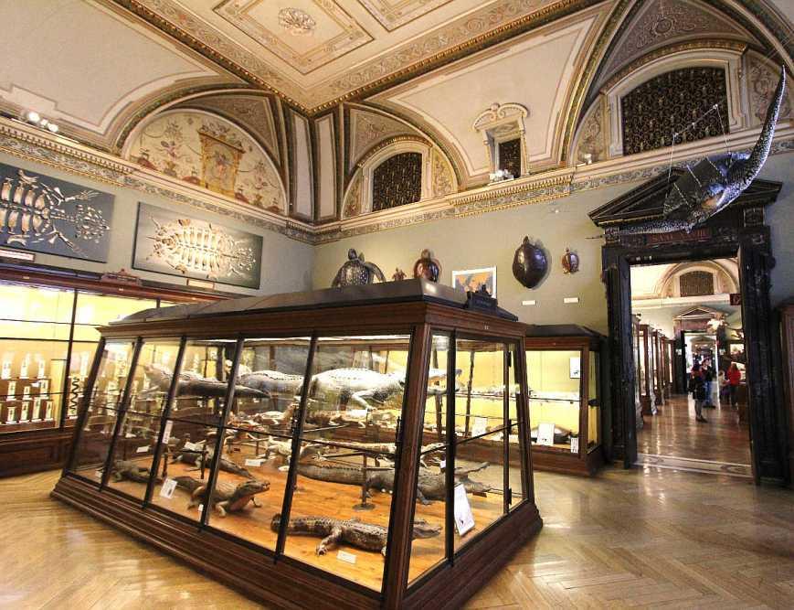 natural-history-museum-vienna-2709