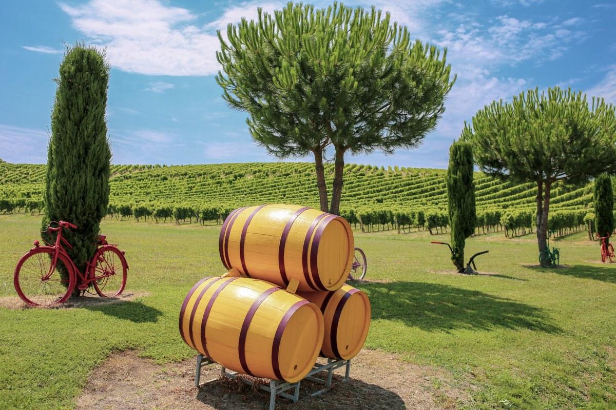 Vineyards of Bordeaux Region