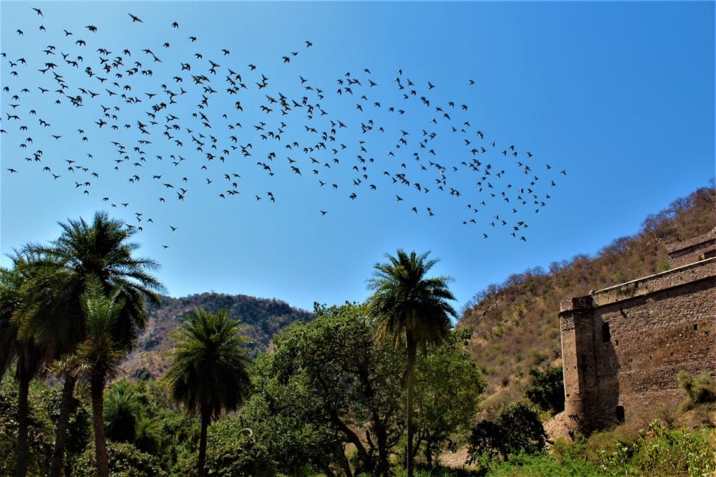 Bhangarh Fort with Kids Pigeons