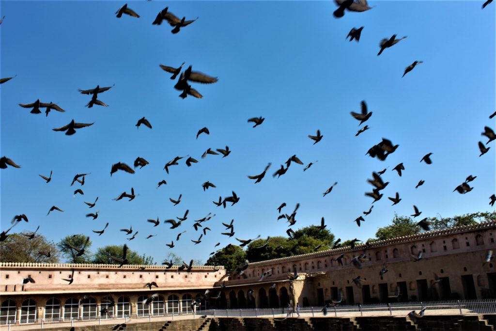Pigeons Chand Baori Stepwell in Abhaneri
