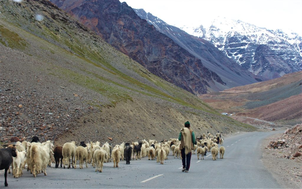Road Trip to Leh Ladakh from Delhi Roads