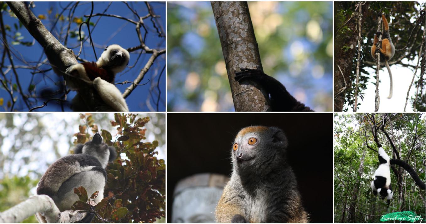 lemur grid