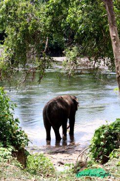 Elefante Kanchanaburi