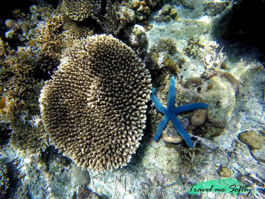 Qué hacer en el nido Snorkel