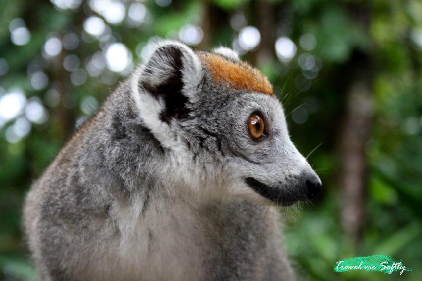 Itinerario de viaje a Madagascar lemur