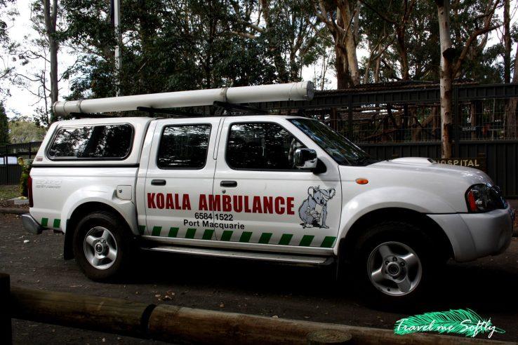 Ambulancia de koalas