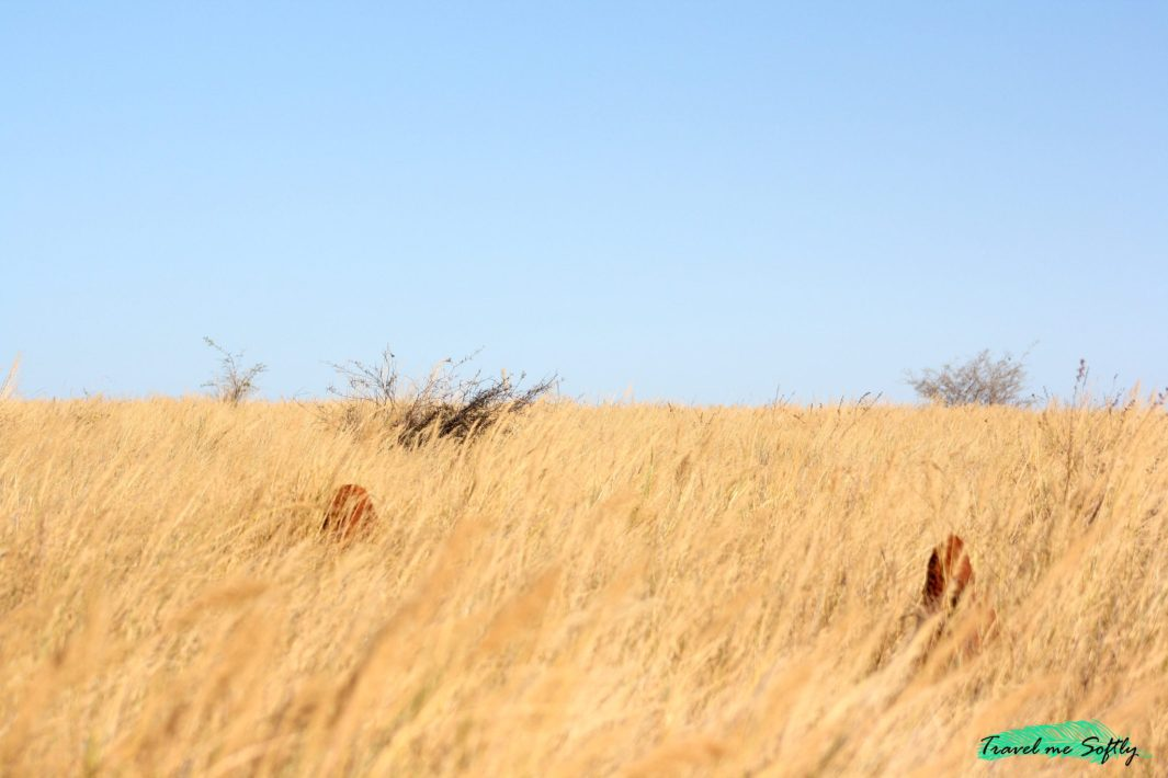 qué ver en Madagascar sabana