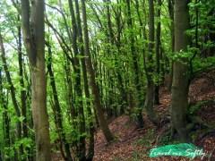 bosque dinamarca