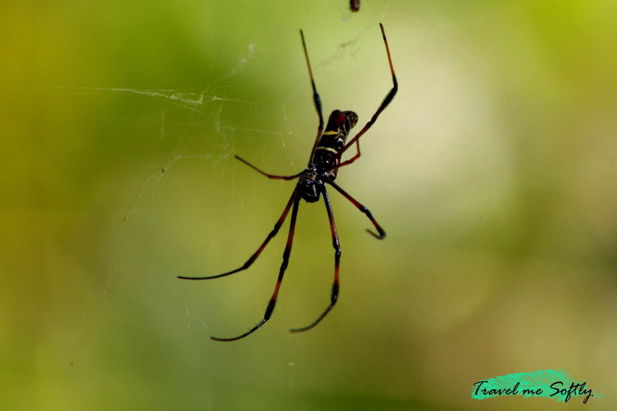 fotografia araña