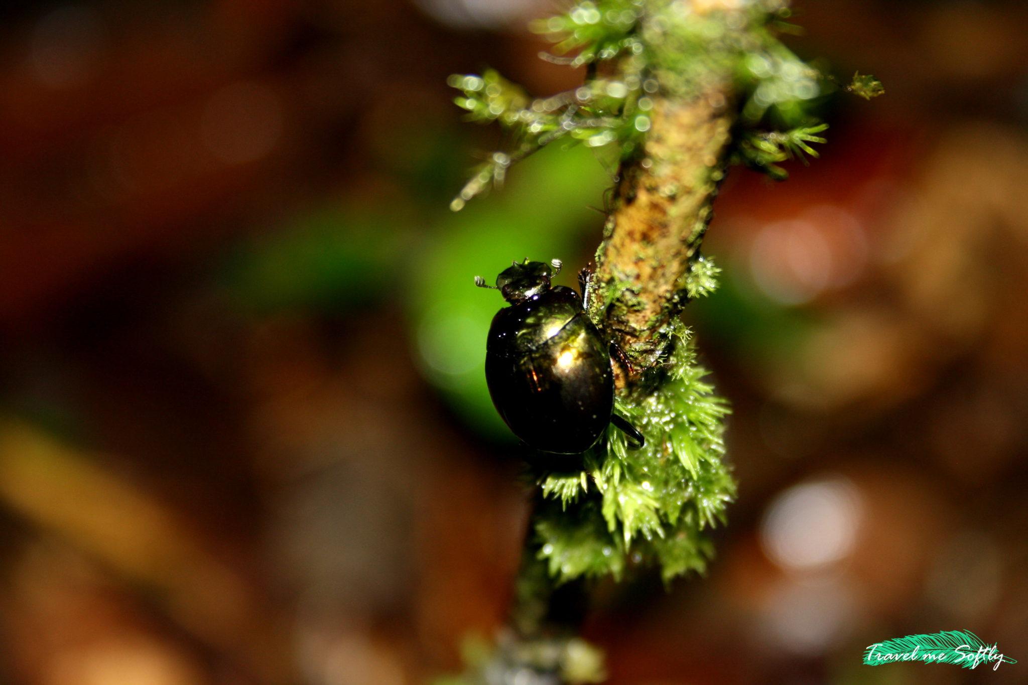 escarabajo fotografía de viajes