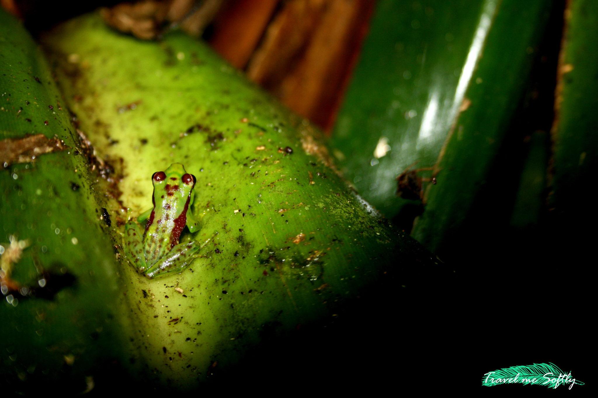 Madagascar fotografía de viajes