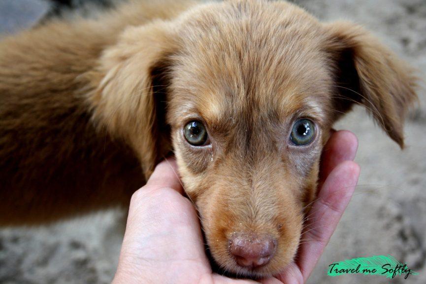 perro en Madagascar