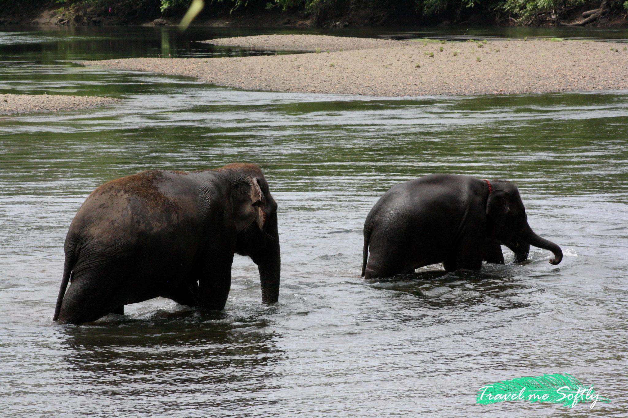 turismo responsable elefantes