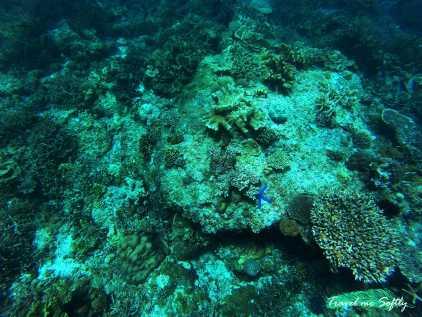 Fondo marino island hopping el nido