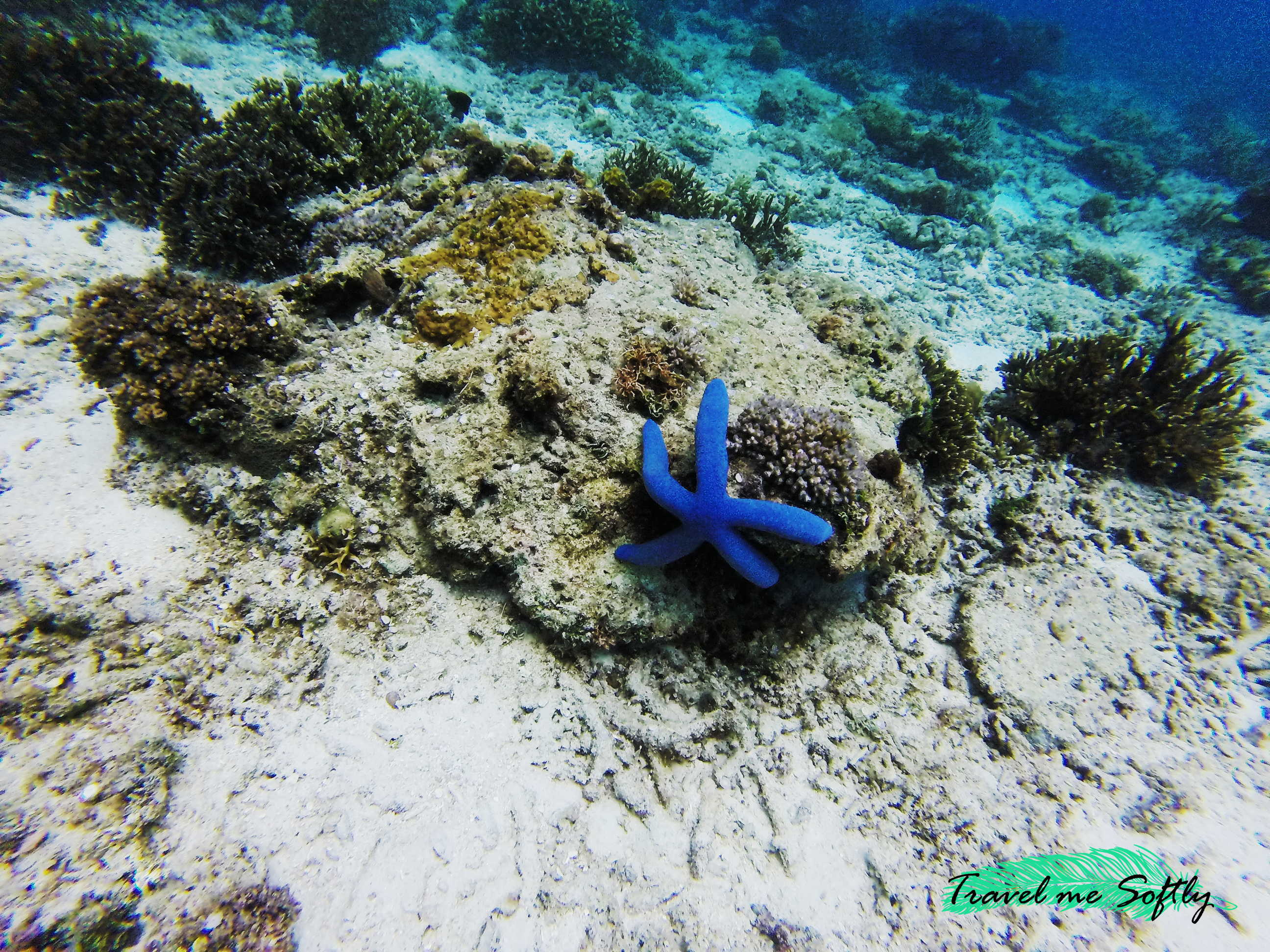 viajes de buceo estrella de mar