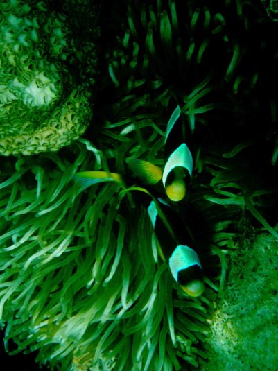 fauna marina nosy komba