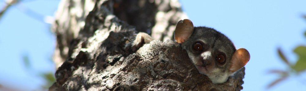 Consejos para ver animales en estado silvestre en tus viajes