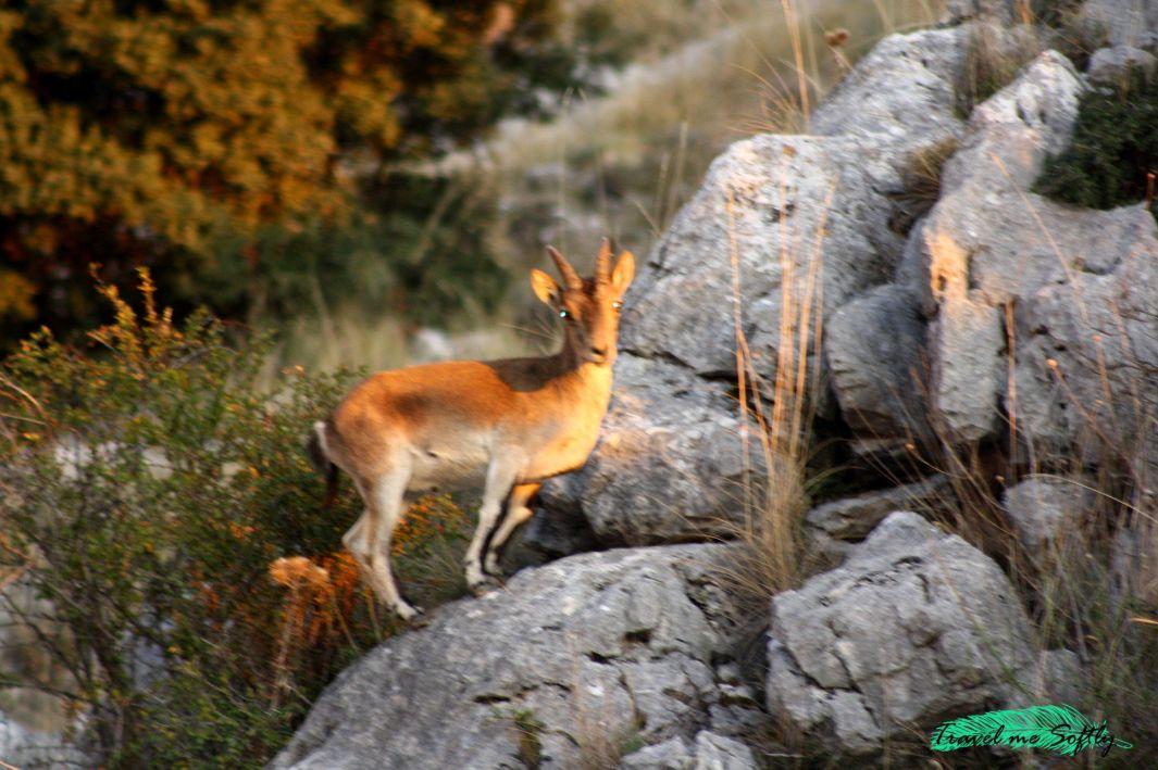 Granada para hacer rutas en bici de montaña fauna