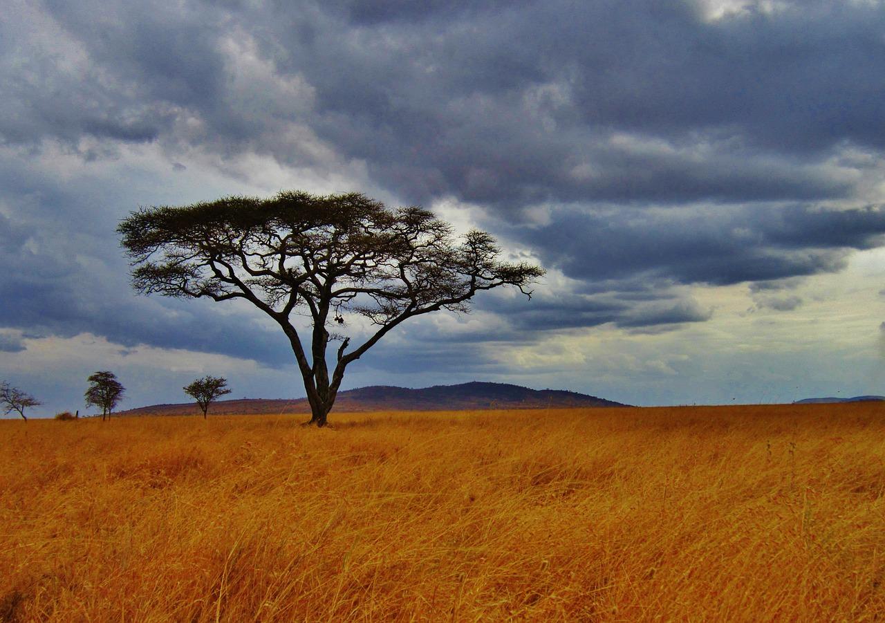 viajar a Tanzania acacia