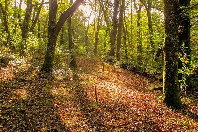 viajar a galicia bosque