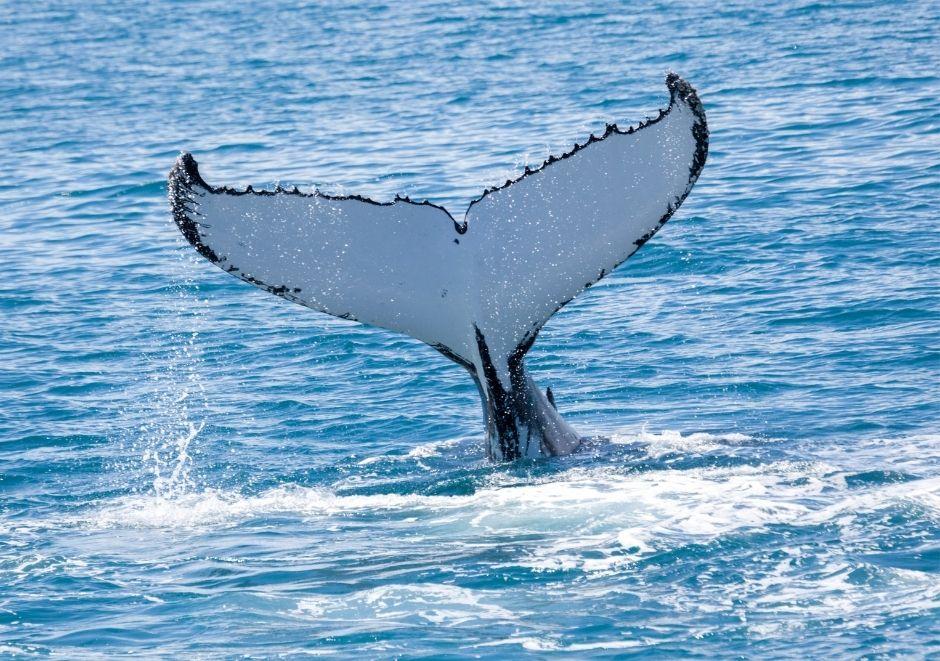 ballena costa capricornio