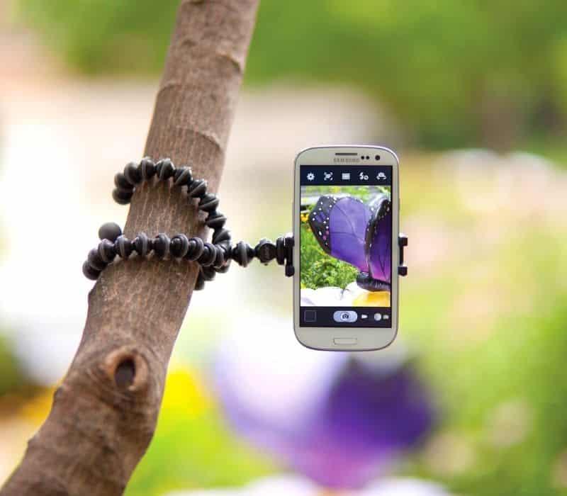 Phone camera tripod wrapped around a tree