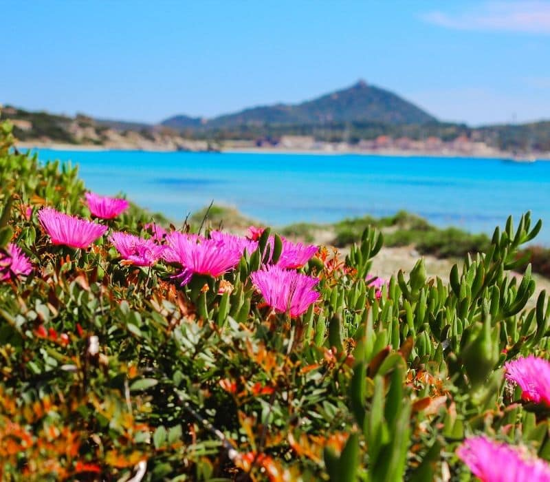 Beach on the coast of oaxaca with mountains in the distance and pink flowers in the foreground