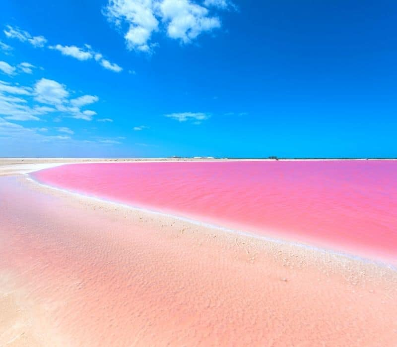 bright pink lakes in mexico