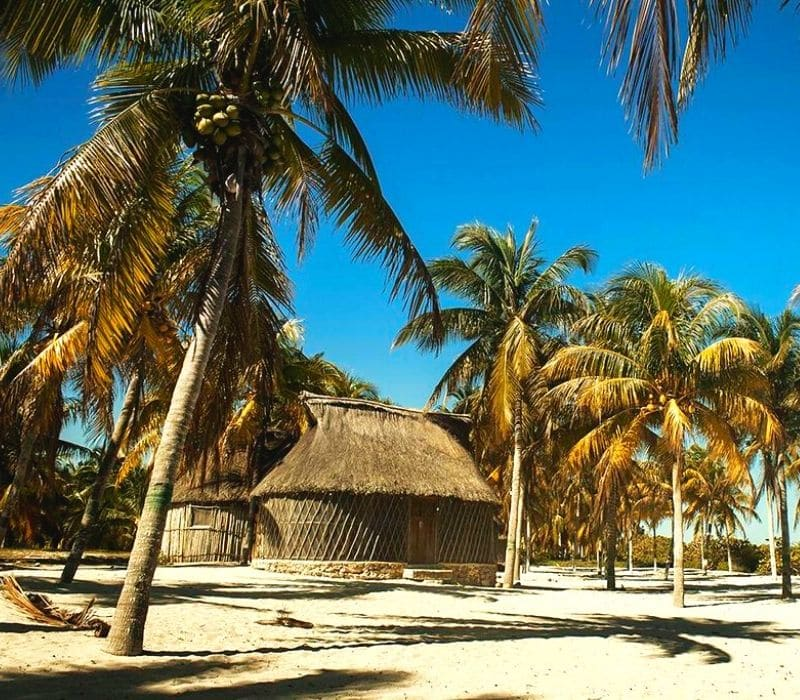 palm trees and huts on a beach