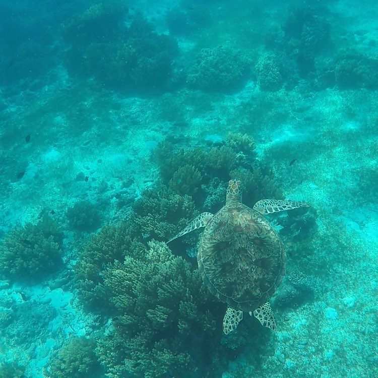 Awesome Things To Do In Panglao Island, Bohol